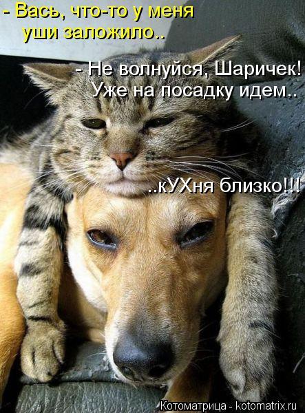 Котоматрица: - Вась, что-то у меня уши заложило.. - Не волнуйся, Шаричек! Уже на посадку идем.. ..кУХня близко!!!