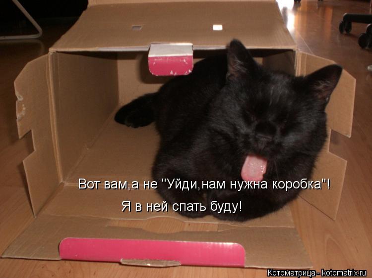 "Котоматрица: Вот вам,а не ""Уйди,нам нужна коробка""! Я в ней спать буду!"