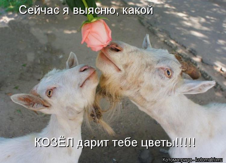 Котоматрица: Сейчас я выясню, какой КОЗЁЛ дарит тебе цветы!!!!!