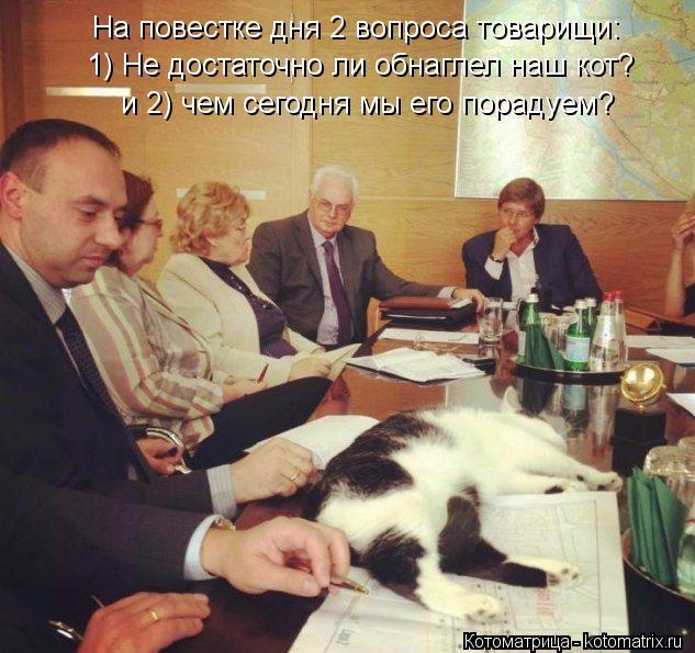 Котоматрица: На повестке дня 2 вопроса товарищи: 1) Не достаточно ли обнаглел наш кот? и 2) чем сегодня мы его порадуем?