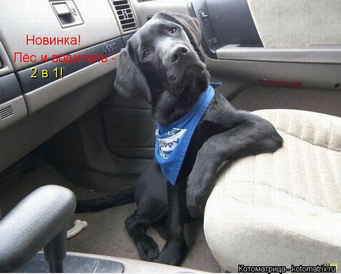 Котоматрица: Новинка! Пёс и водитель - 2 в 1!