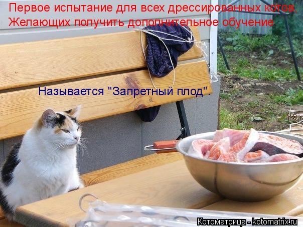 """Котоматрица: Первое испытание для всех дрессированных котов, Желающих получить дополнительное обучение Называется """"Запретный плод""""."""