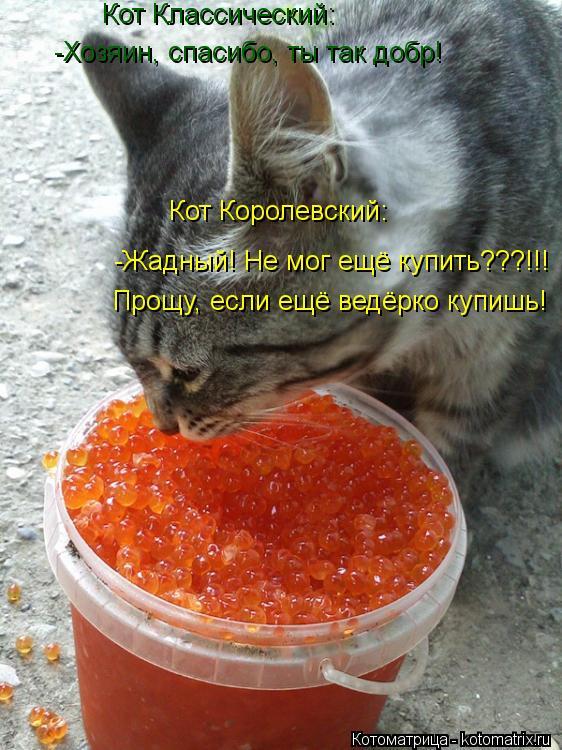 Котоматрица: Кот Классический: -Хозяин, спасибо, ты так добр! Кот Королевский: -Жадный! Не мог ещё купить???!!! Прощу, если ещё ведёрко купишь!