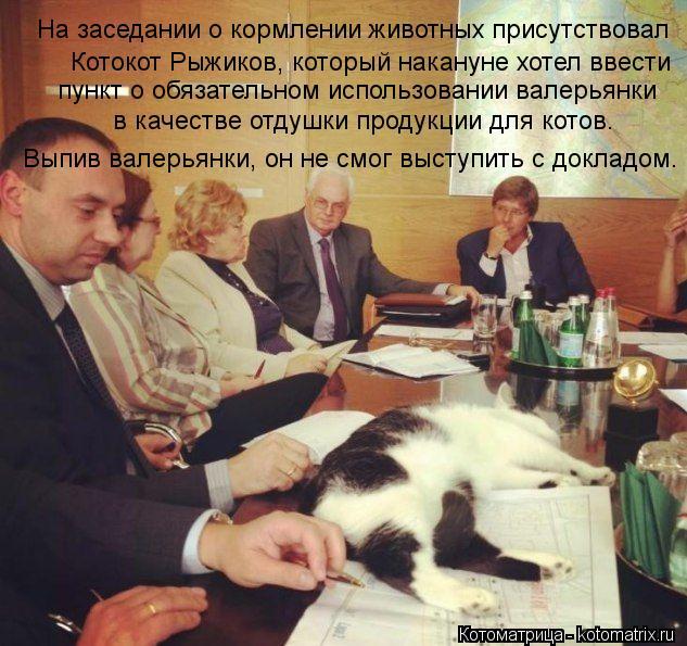 Котоматрица: На заседании о кормлении животных присутствовал Котокот Рыжиков, который накануне хотел ввести пункт о обязательном использовании валерь