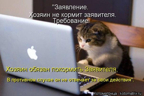 "Котоматрица: ""Заявление. Хозяин не кормит заявителя. Требование. Хозяин обязан покормить Заявителя, В противном случае он не отвечает за свои действия""."