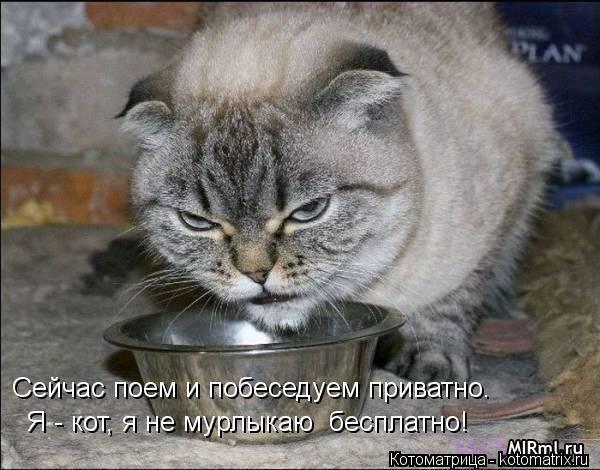 Котоматрица: Сейчас поем и побеседуем приватно. Я - кот, я не мурлыкаю  бесплатно!