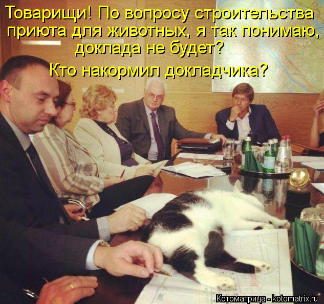 Котоматрица: Товарищи! По вопросу строительства  приюта для животных, я так понимаю,  доклада не будет?  Кто накормил докладчика?