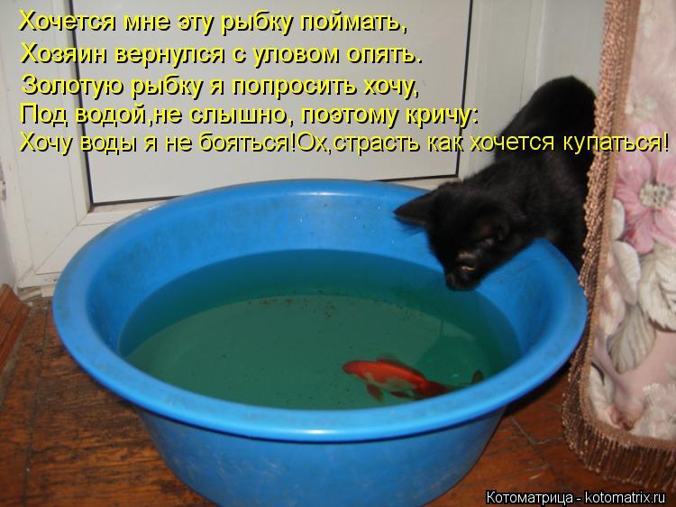 Котоматрица: Хочется мне эту рыбку поймать, Хозяин вернулся с уловом опять. Золотую рыбку я попросить хочу, Под водой,не слышно, поэтому кричу: Хочу воды