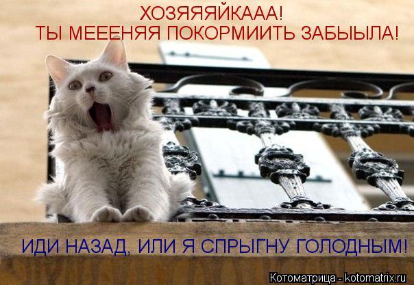Котоматрица: ХОЗЯЯЯЙКААА! ТЫ МЕЕЕНЯЯ ПОКОРМИИТЬ ЗАБЫЫЛА! ИДИ НАЗАД, ИЛИ Я СПРЫГНУ ГОЛОДНЫМ!