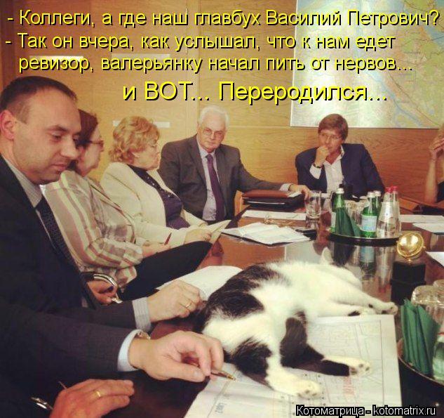 Котоматрица: - Коллеги, а где наш главбух Василий Петрович? - Так он вчера, как услышал, что к нам едет ревизор, валерьянку начал пить от нервов…  и ВОТ... Пе