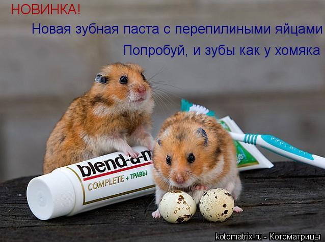 Котоматрица: НОВИНКА! Новая зубная паста с перепилиными яйцами Попробуй, и зубы как у хомяка