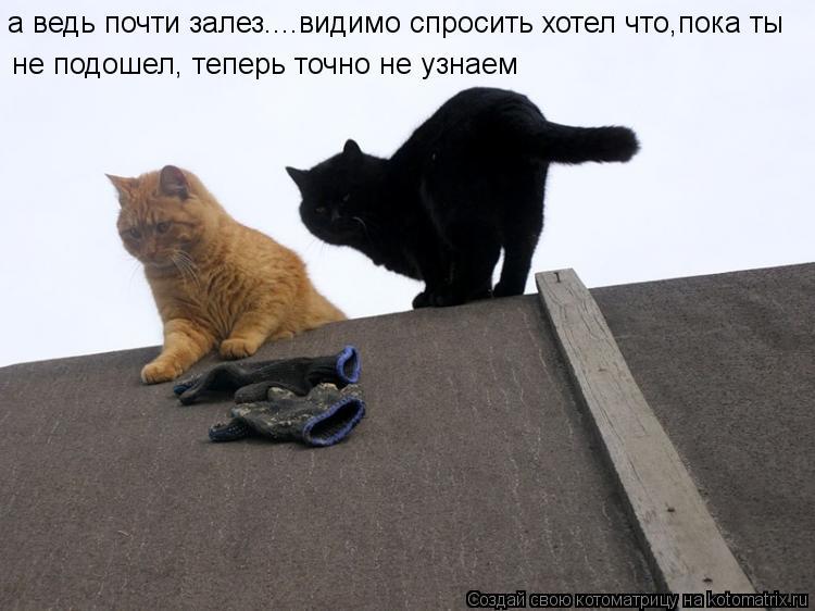 Котоматрица: а ведь почти залез....видимо спросить хотел что,пока ты не подошел, теперь точно не узнаем