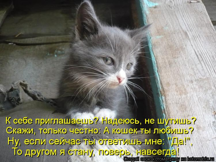 """Котоматрица: Скажи, только честно: А кошек ты любишь? Ну, если сейчас ты ответишь мне: """"Да!"""", То другом я стану, поверь, навсегда! К себе приглашаешь? Надеюсь,"""