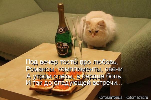 Котоматрица: Под вечер тосты про любовь, Романсы, комплименты, свечи... И так до следующей встречи... А утром слёзы, в сердце боль.