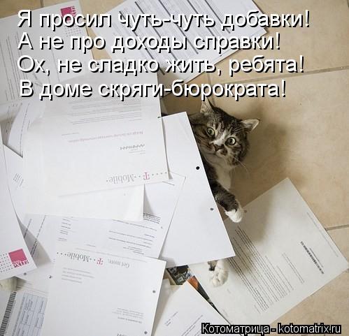 Котоматрица: Я просил чуть-чуть добавки! А не про доходы справки! Ох, не сладко жить, ребята! В доме скряги-бюрократа!