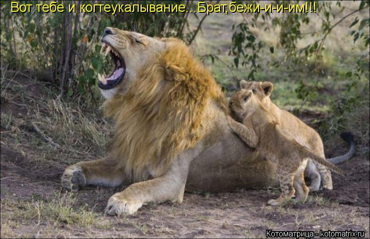 Котоматрица: Вот тебе и когтеукалывание...Брат,бежи-и-и-им!!!