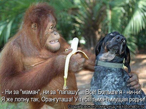 """Котоматрица: - Ни за """"маман"""", ни за """"папашу""""... Всё! Больше я - ни-ни! Я же лопну так, Орангуташа! У тебя тьма-тьмущая родни!"""