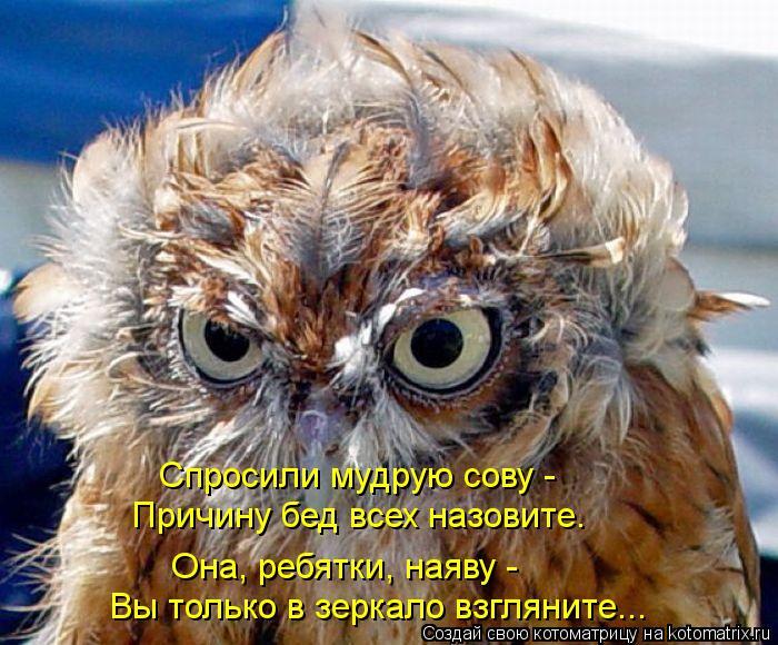 Котоматрица: Спросили мудрую сову -  Причину бед всех назовите. Вы только в зеркало взгляните... Она, ребятки, наяву -