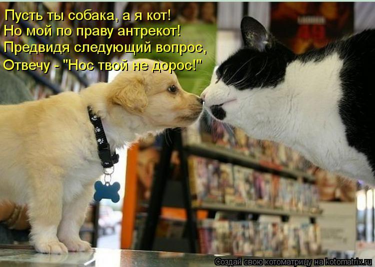 """Котоматрица: Пусть ты собака, а я кот! Но мой по праву антрекот! Предвидя следующий вопрос, Отвечу - """"Нос твой не дорос!"""""""