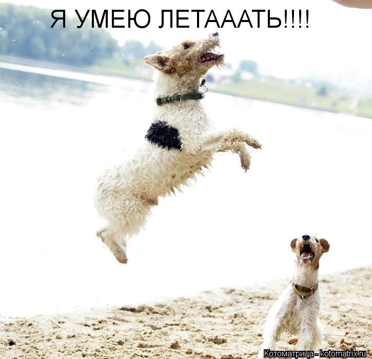 Котоматрица: Я УМЕЮ ЛЕТАААТЬ!!!!