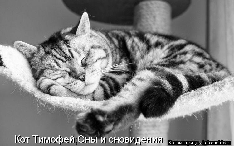 Сновидения кот