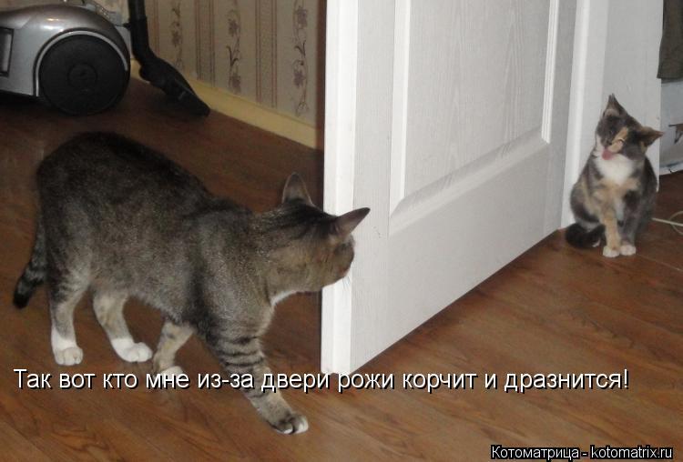 Котоматрица: Так вот кто мне из-за двери рожи корчит и дразнится!
