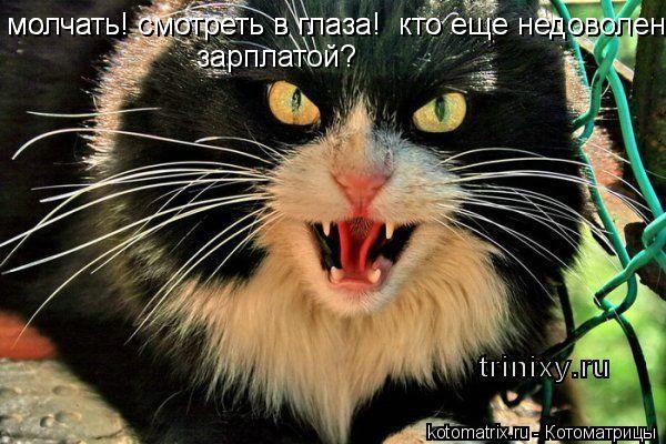 Котоматрица: молчать! смотреть в глаза!  кто еще недоволен молчать! смотреть в глаза!  кто еще недоволен зарплатой?