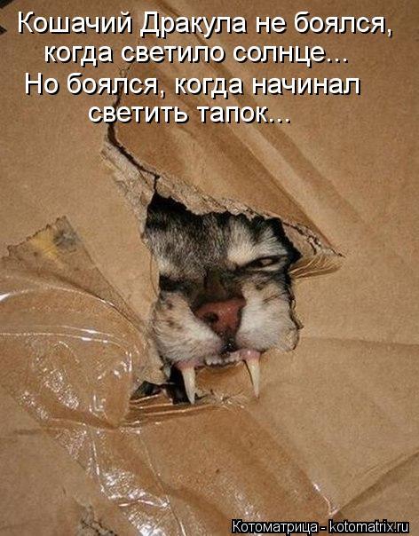 Котоматрица Kotomatritsa_-K