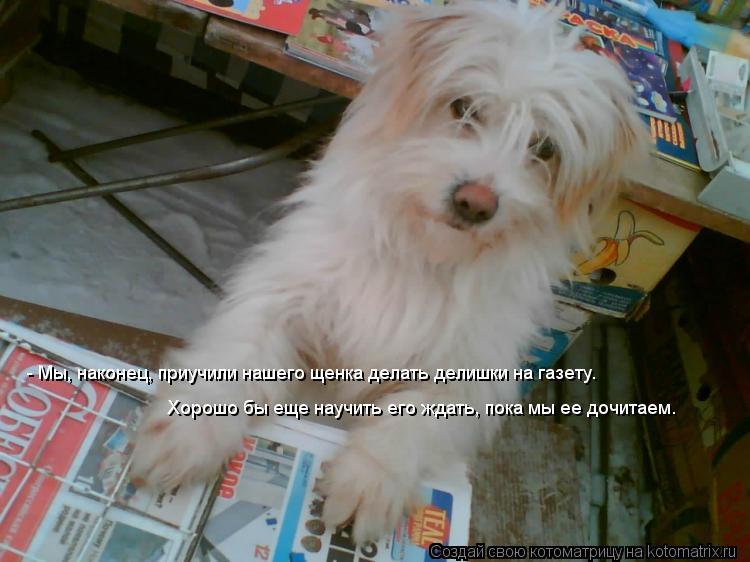 Котоматрица: - Мы, наконец, приучили нашего щенка делать делишки на газету.   Хорошо бы еще научить его ждать, пока мы ее дочитаем.