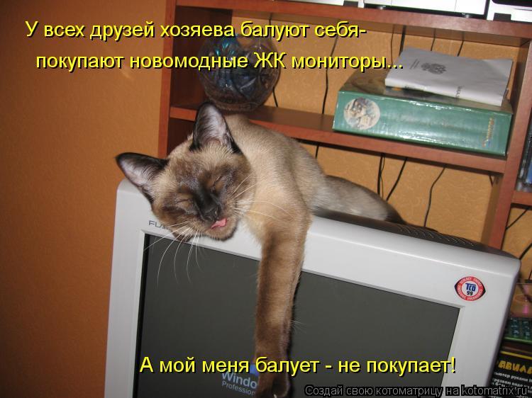 Котоматрица: У всех друзей хозяева балуют себя- покупают новомодные ЖК мониторы... А мой меня балует - не покупает!