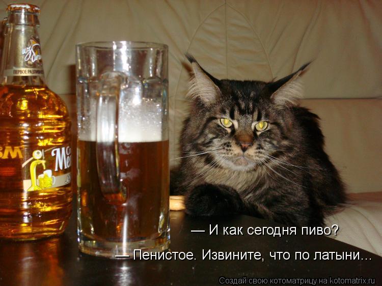 Котоматрица: — И как сегодня пиво? — И как сегодня пиво? — Пенистое. Извините, что по латыни…  — Пенистое. Извините, что по латыни…