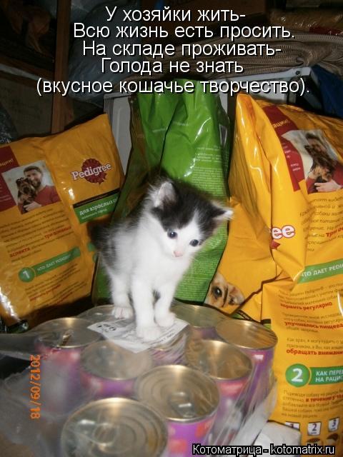 Котоматрица: У хозяйки жить- Всю жизнь есть просить. На складе проживать- Голода не знать (вкусное кошачье творчество).