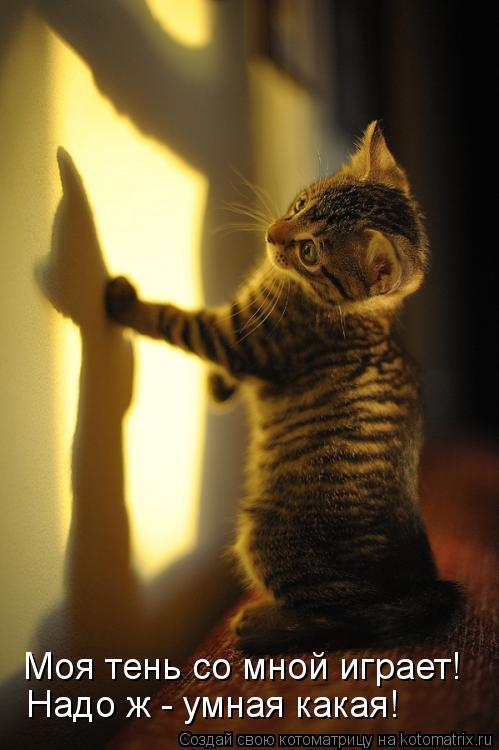 Котоматрица: Моя тень со мной играет! Надо ж - умная какая!