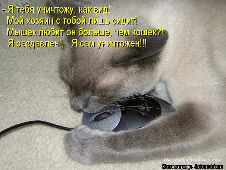 Котоматрица: - Я тебя уничтожу, как вид! Мой хозяин с тобой лишь сидит! Мышек любит он больше, чем кошек?! Я раздавлен!..  Я сам уничтожен!!!