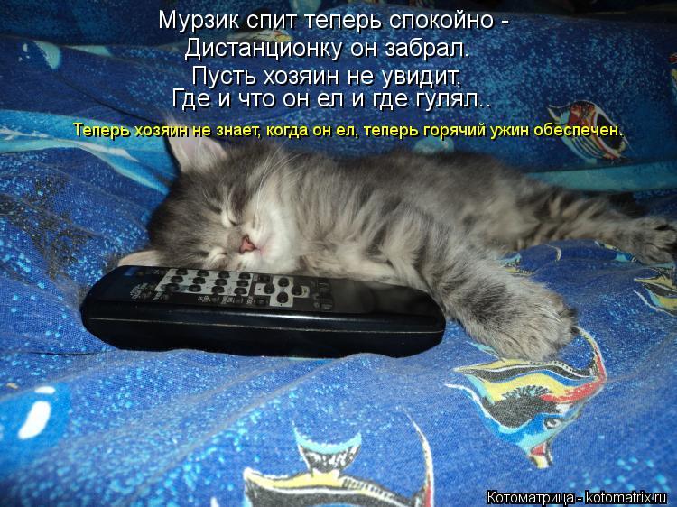 Котоматрица: Мурзик спит теперь спокойно -  Дистанционку он забрал. Пусть хозяин не увидит, Где и что он ел и где гулял.. Теперь хозяин не знает, когда он ел