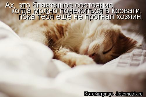 Котоматрица: Ах, это блаженное состояние, Ах, это блаженное состояние, когда можно понежиться в кровати, пока тебя ещё не прогнал хозяин.