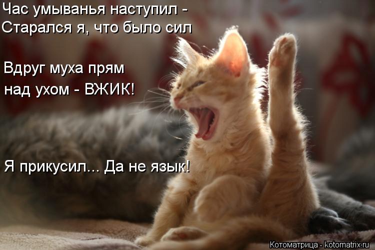 Котоматрица: Час умыванья наступил - Старался я, что было сил Вдруг муха прям над ухом - ВЖИК! Я прикусил... Да не язык!