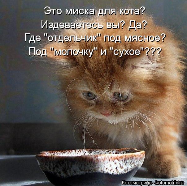 """Котоматрица: Это миска для кота?  Издеваетесь вы? Да? Где """"отдельчик"""" под мясное? Под """"молочку"""" и """"сухое""""???"""
