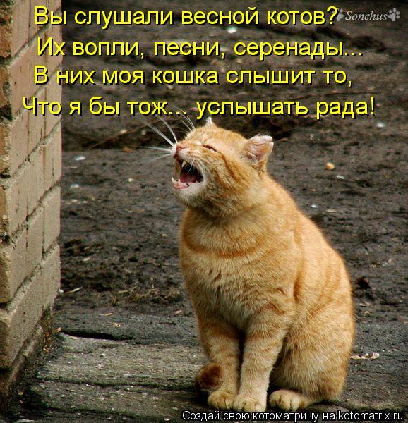 Котоматрица: В них моя кошка слышит то, Вы слушали весной котов? Их вопли, песни, серенады... Что я бы тож... услышать рада!