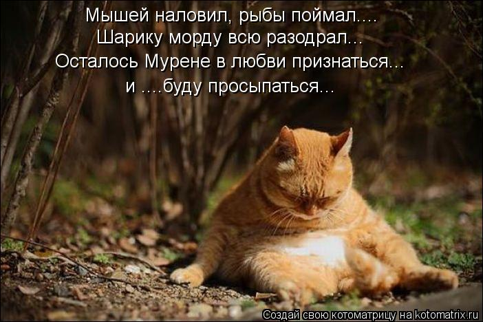 Котоматрица: Мышей наловил, рыбы поймал.... Шарику морду всю разодрал... Осталось Мурене в любви признаться... и ....буду просыпаться...