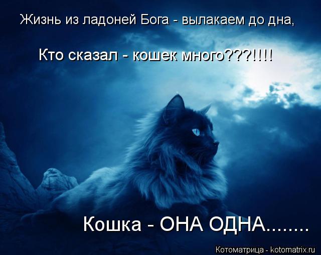 Котоматрица: Жизнь из ладоней Бога - вылакаем до дна, Кошка - ОНА ОДНА........ Кто сказал - кошек много???!!!!