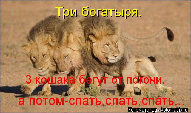 Котоматрица: Три богатыря. 3 кошака бегут от погони, а потом-спать,спать,спать...