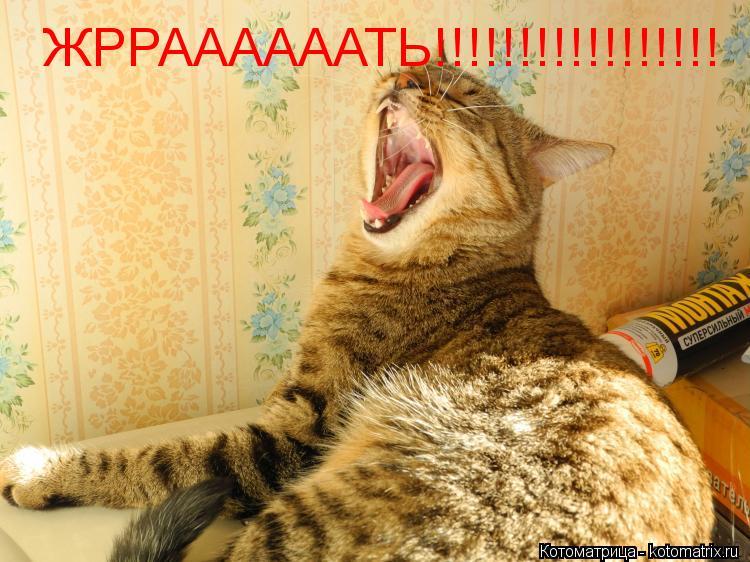 Котоматрица: ЖРРААААААТЬ!!!!!!!!!!!!!!!!!