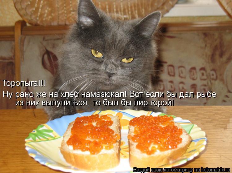Котоматрица: Ну рано же на хлеб намазюкал! Вот если бы дал рыбе   из них вылупиться, то был бы пир горой! Торопыга!!!