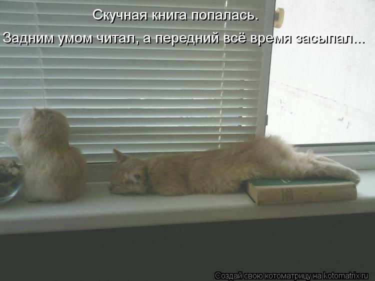 Котоматрица: Скучная книга попалась. Задним умом читал, а передний всё время засыпал...