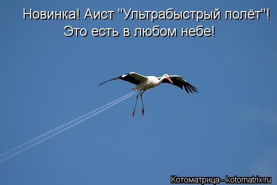 """Котоматрица: Новинка! Аист """"Ультрабыстрый полёт""""! Это есть в любом небе!"""