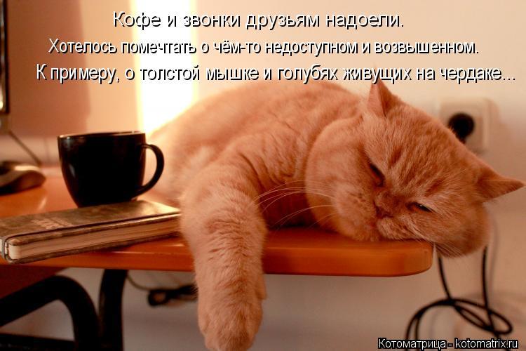 Котоматрица: Кофе и звонки друзьям надоели. Хотелось помечтать о чём-то недоступном и возвышенном. К примеру, о толстой мышке и голубях живущих на чердак