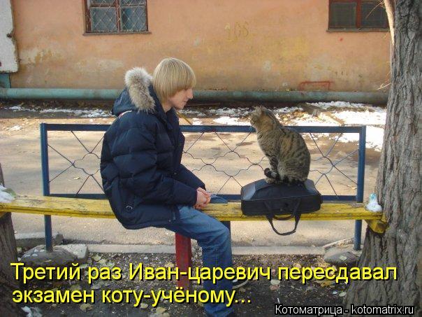 Котоматрица: Третий раз Иван-царевич пересдавал экзамен коту-учёному...