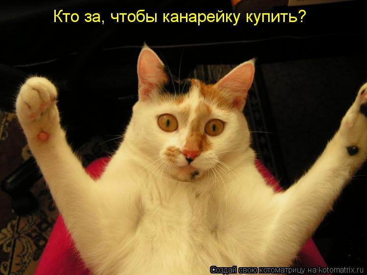 Котоматрица: Кто за, чтобы канарейку купить?