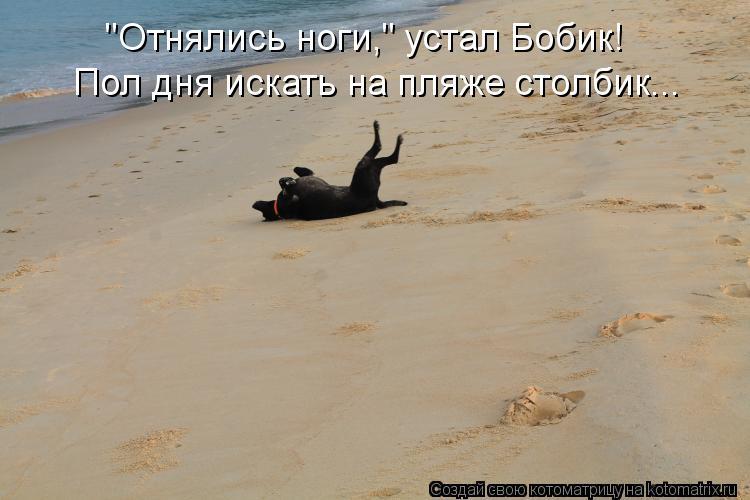 """Котоматрица: """"Отнялись ноги,"""" устал Бобик! Пол дня искать на пляже столбик..."""